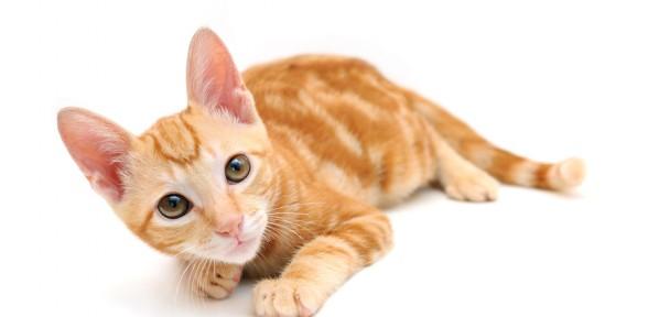 Oferta octubre – mes del gato