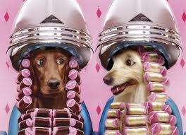 perros secador