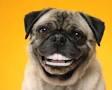 La higiene bucal de nuestras mascotas