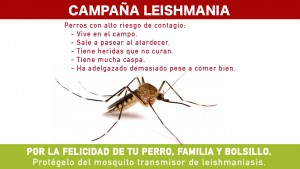 tv_leishmania