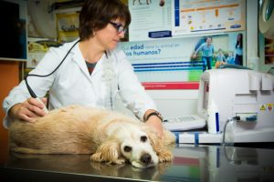 Campañas de salud animal