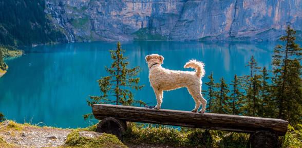 Lo que tienes que saber para viajar con tu mascota
