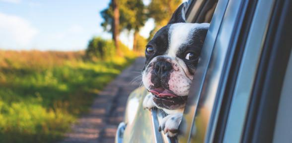 Cómo viajar con nuestra mascota en cada medio de transporte