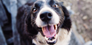 La higiene bucal de tu mascota también es importante