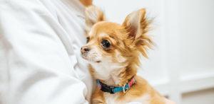 Desparasitación para cuidar de la salud de tu mascota