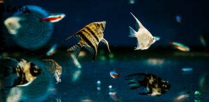 El mes de los acuarios en Safracan